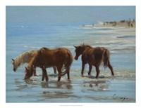 Framed Chincoteague Ponies