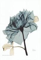 Framed Teal Spirit Rose 2