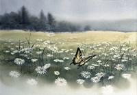 Framed Daisy Field
