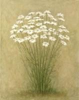 Framed Floral C