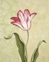 Framed Tulip 2