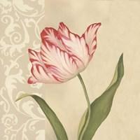 Framed Cream Tulip