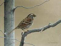 Framed White Throat Sparrow
