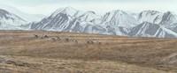 Framed Northern Skyline - Caribou