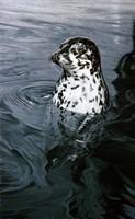 Framed Harbor Seal
