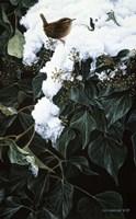 Framed Winter Wren On Ivy