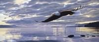 Framed Dawn Flight