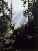 Framed Edge Of The Forest