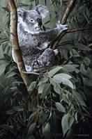 Framed Eucalyptus Climber