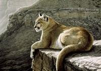 Framed Rimrock - Cougar