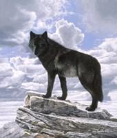 Framed Black Wolf On Skyline