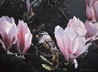Framed Sparrow In Magnolia