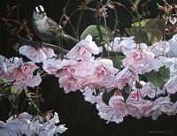 Framed Apple Blossoms