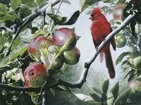 Framed Cardinal And Apples