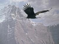 Framed Mountain Flight