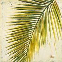 Framed Baru Palm I