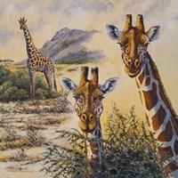 Framed Safari IV