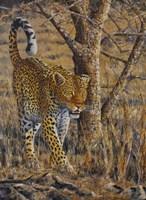 Framed Leopard Walking