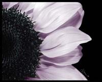 Framed Hints of Lavender