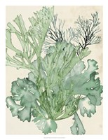 Framed Seaweed Composition II
