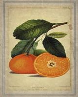 Framed Oranges 1