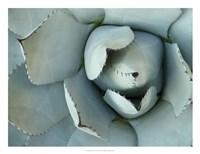 Framed Agave Detail II