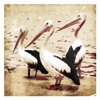 Framed Birds At Sea