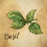 Framed Basil on Burlap