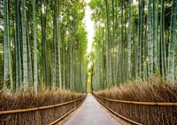 Framed Bamboo Forest, Kyoto, Japan