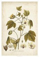 Framed Elegant Botanical I