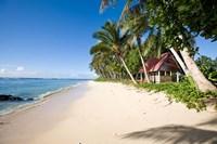 Framed Palm Trees at Lavena Beach, Taveuni, Fiji