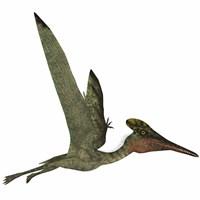 Framed Pterodactylus Flying Reptile