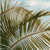 Framed Coconut Palm over Blue I