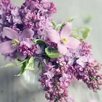 Framed Fresh Morning Bloom