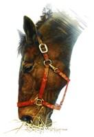 Framed Equestian