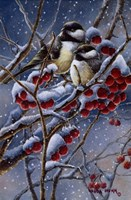 Framed Winter Chickadees And Berries