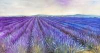 Framed Lavender VI