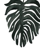Framed Tropical Palm II BW