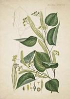 Framed Flower Drawing 8