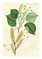 Framed Flower Drawing 21
