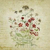 Framed Flower Print Three