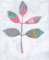 Framed Leaf Abstract III