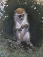 Framed Curious Monkey