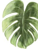 Framed Palm Green I
