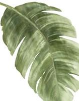 Framed Palm Green II