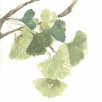 Framed Gingko Leaves I on White