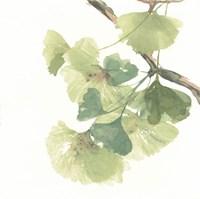 Framed Gingko Leaves II on White