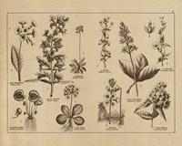 Framed Botanical Floral Chart I Vintage