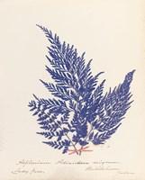 Framed Botanical Fern XVIII Blue