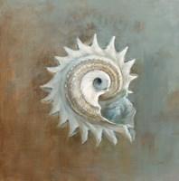 Framed Treasures from the Sea III